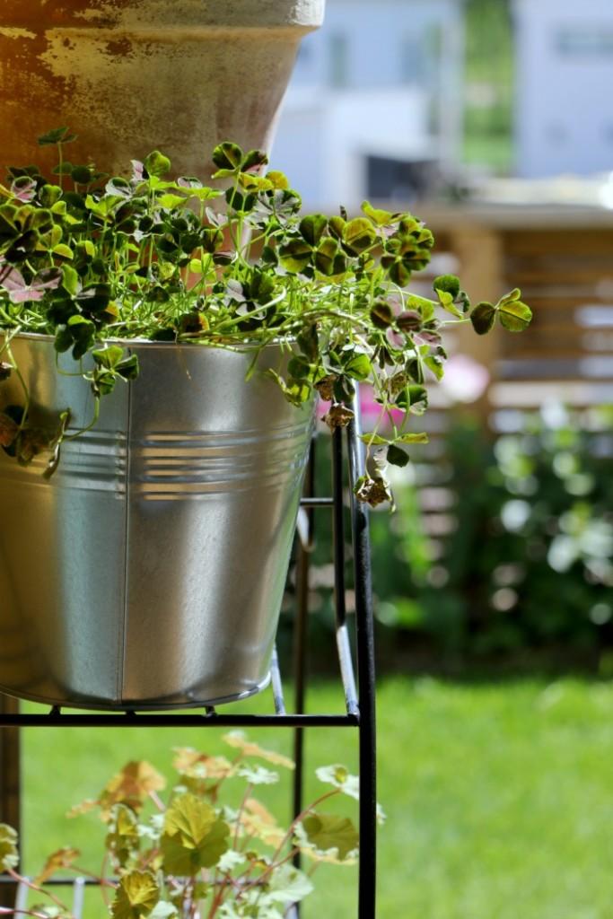 terassin sisustus viherkasveilla kuten onnenapilalla