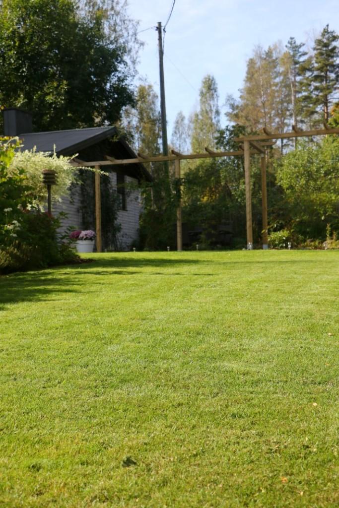 siisti piha nurmikko