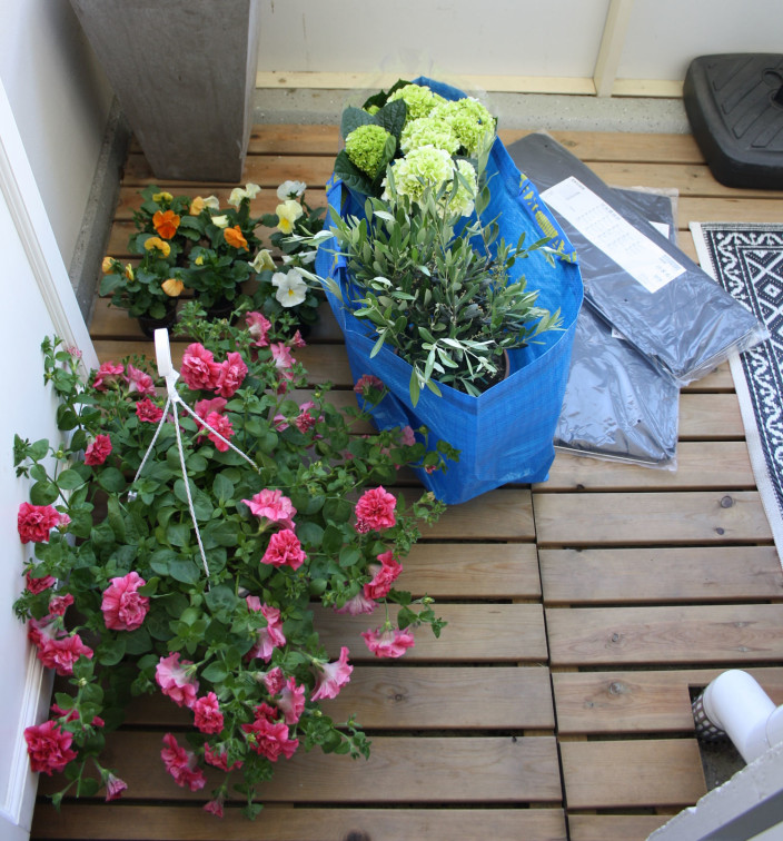 parveke, kesäkukat, petunia, hortensia, orvokit
